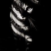 striped cat...