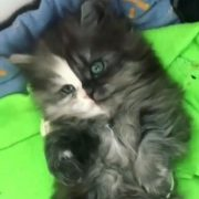 so cute - Watch More Videos Here 👇👇