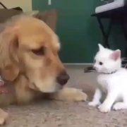 Cute Cat Taps