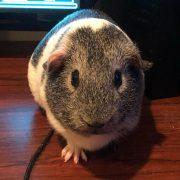Hi I'm Olaf and I like warm hugs! I also like watching mummy play video games!...