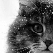 source internet#cat #chat #mignonnerie...